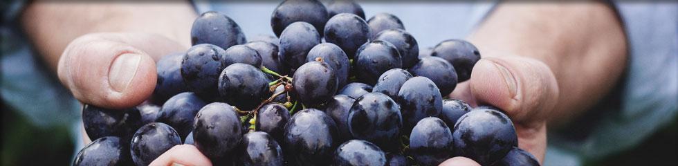 Le vignoble et les vins Pierre Bourré